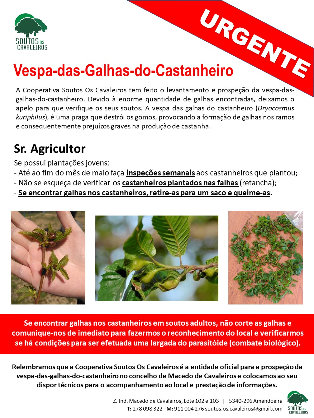 VESPA-DAS-GALHAS-DO-CASTANHEIRO